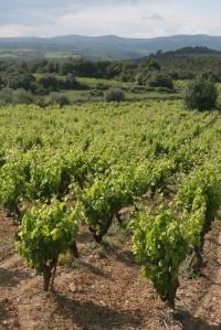 les vignobles de Minervois